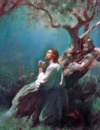Bài Giảng Chúa Nhật V thường niên năm B-Lm Phê-rô Lê Văn Chính